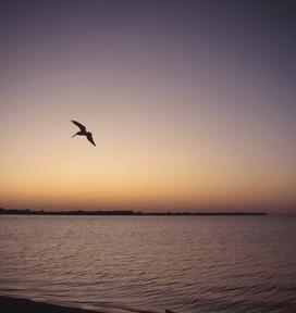 bird-ocean2